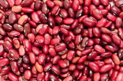 Red Beans close up stock photo
