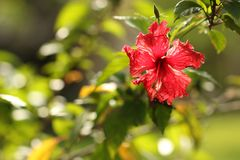 Red beautiful flower of the Royalty Free Stock Image