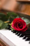 Red beautiful rose on piano keyboard. Stock Images