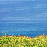 Red Bed of Flowers With Blue Background royalty free stock image