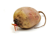 Red beet Stock Images
