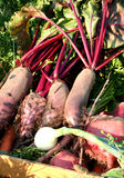 Red beet Stock Photo