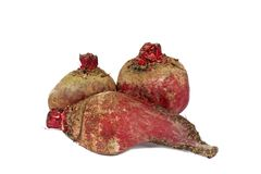 Red beet Stock Photography