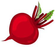 Red beet. Royalty Free Stock Photos