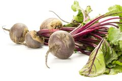 Fresh raw Beetroot isolated isolated on white. Red beet bundle with fresh greens isolated on white background five bulbs root with leaves Royalty Free Stock Photography
