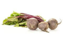 Fresh raw Beetroot isolated isolated on white. Red beet with greens isolated on white background three bulbs root with fresh young leaves Stock Image