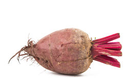 Red beet isolated Stock Image