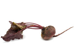 Red beet with leaves on a white Royalty Free Stock Photo