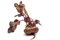 Red beet with leaves on a white Stock Image