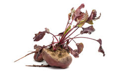 Red beet with leaves on a white Royalty Free Stock Image