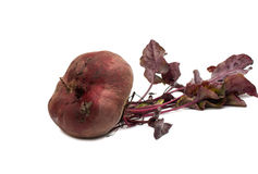 Red beet with leaves on a white Royalty Free Stock Images