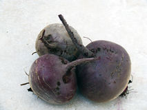 Red beet pictures for logo and designs Stock Photography