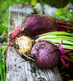 Red beet various on old beam wooden and gras in garden Stock Image