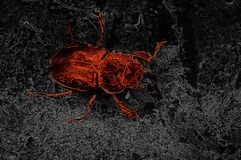 Red beetle Abstraction. stock photos