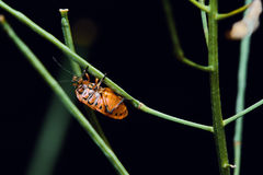Red Beetle On Green Straws. Little Red Beetle On Green Straws In the Forest Macro Shot Stock Photography