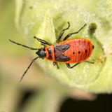 Red beetle in nature. close-up. In the park in nature Royalty Free Stock Photography