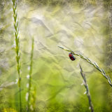 Red beetle in nature Royalty Free Stock Image