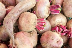 Red beetroot Stock Image