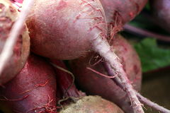 Red Beets. A bunch of red beets are an earthy addition to the local grower's market Stock Images