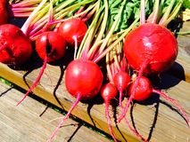 Red Beets Stock Image