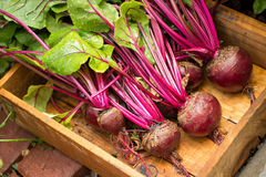 Red Beets Stock Photos