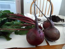 Red beets with green tops sit in the kitchen royalty free stock photography