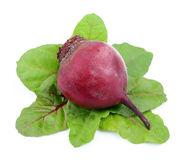 Red beets with swiss chard leafs Royalty Free Stock Photo