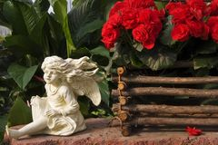 Red Begonias Display Stock Photography