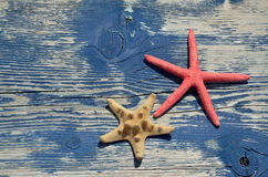 Red and beige sea star on wooden beach bench Stock Image