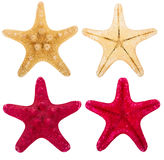 Red and beige starfish collection Royalty Free Stock Images