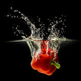 Red bell pepper falling in water with splash on black background Royalty Free Stock Photos