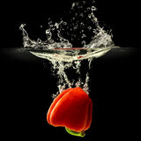 Red bell pepper falling in water with splash on black background Royalty Free Stock Image
