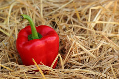 Red bell pepper fresh colorful Stock Photos