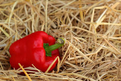 Red bell pepper fresh colorful Stock Images
