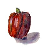 Red bell pepper. Hand drawn watercolor painting on white background, Royalty Free Stock Photo