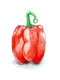 Red bell pepper isolated on white background hand drawn in coloured pencils Stock Images