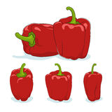 Red bell pepper,sweet pepper or capsicum Stock Image