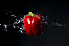 Red bell pepper with water splash on black Royalty Free Stock Images