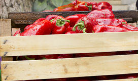 Red Bell Peppers griling Royalty Free Stock Photo