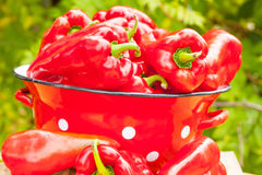 Red bell peppers Royalty Free Stock Photos