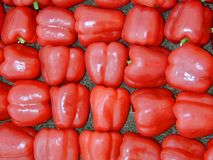 Red bell peppers. Decorated in beautiful lines Stock Photography