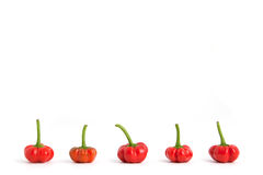 Red bell peppers in row. Red bell peppers line in a row at bottom of photo on white background Royalty Free Stock Photo
