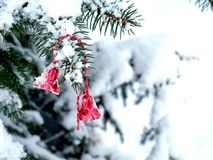 Red bells, winter the city, beauty stock photography