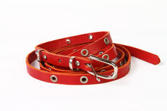 Red belt for lady Stock Images