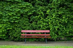 Red bench. Infront of green bushes Royalty Free Stock Photo
