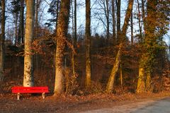 Red bench in an autumn forest lit by the setting sun stock images