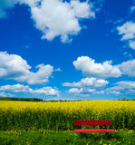 Red bench in front of blooming canola field Royalty Free Stock Image