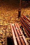 Red bench in a park in autumn. Night shoot. Royalty Free Stock Image