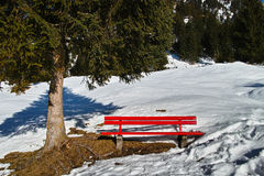 Red bench under fir tree at snow Royalty Free Stock Photos