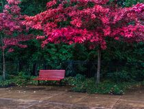 Red bench under fall colors on a rainy day royalty free stock photography